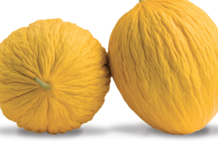 Melone Gialletto