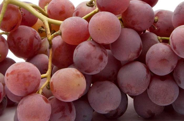 Uva red globe p m gregorelli - Red globe uva da tavola ...